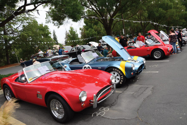 """Cobra Day carefully organized the cars by type. Those in the foreground shown here are designated as """"Continuation Cobras,"""" since they are recently manufactured by Shelby."""